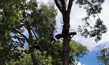 Sport Camp 2020 - accrobranche