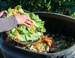 Illustration compost