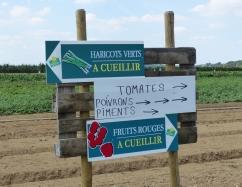 Cueillette à Puiseux-Pontoise